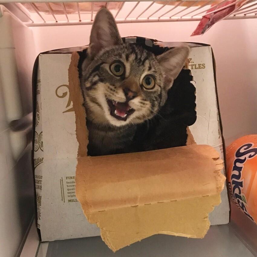 Я открыл холодильник, и он моментально забрался в коробку