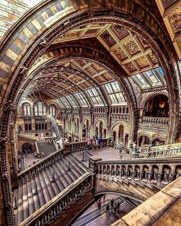9. Музей естественной истории, Лондон