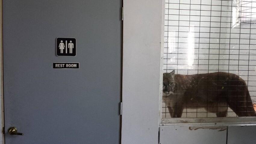 Пожалуй в туалет я не пойду