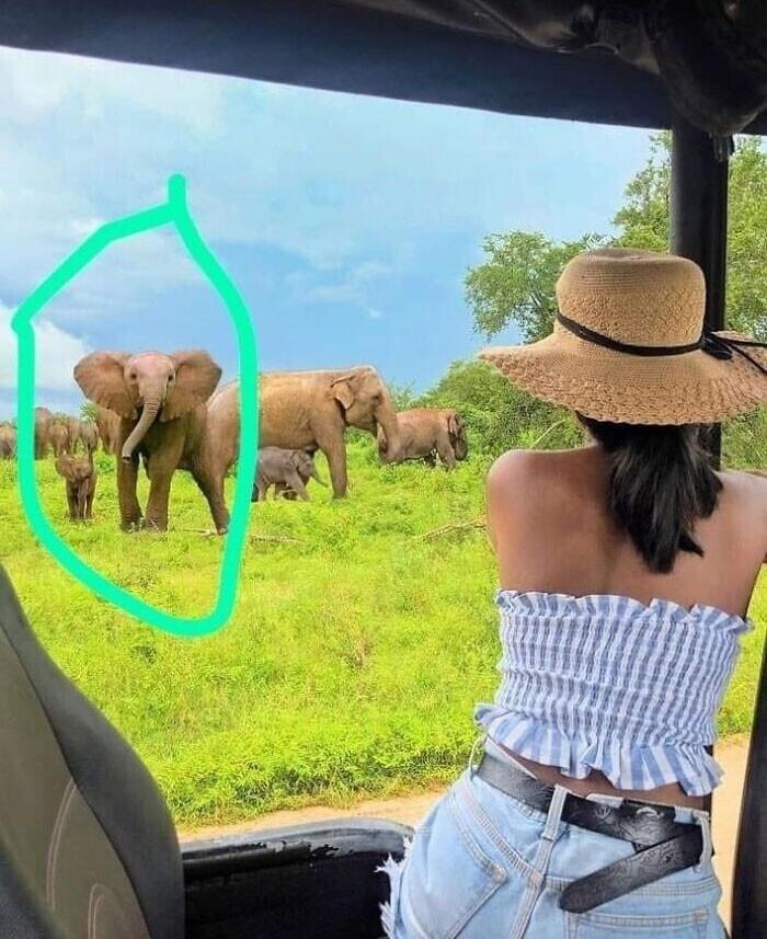 Инстаграмерша добавила фотошопом слонов на свой снимок из Шри-Ланки. Но вот беда - слоны оказались африканскими