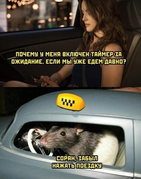 Будни таксомоторов и таксоводителей