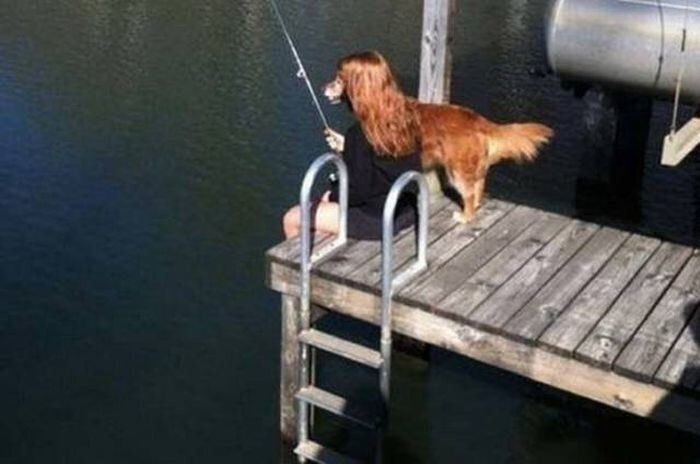 Собака-рыболов?