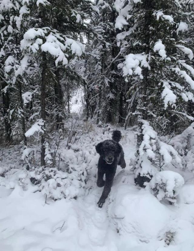 Человек бежит по лесу? Присмотритесь