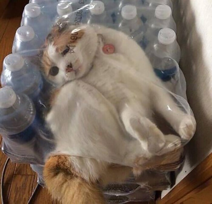 20 самых внезапных котов в мире