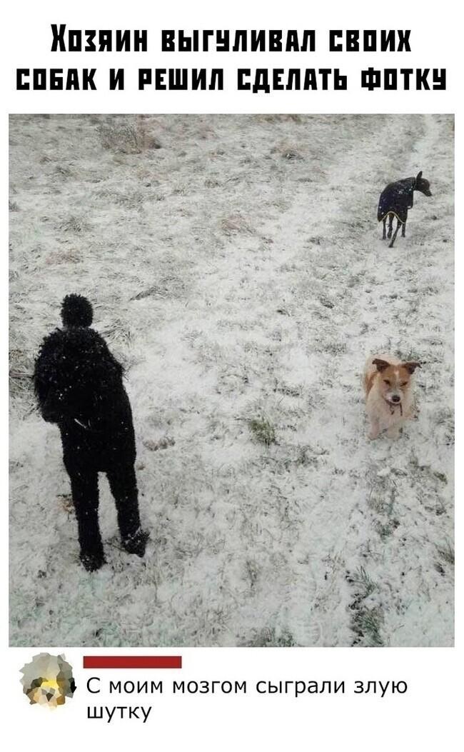Хозяин выгуливал трех своих собак, сделал фотку. Где третья собака?
