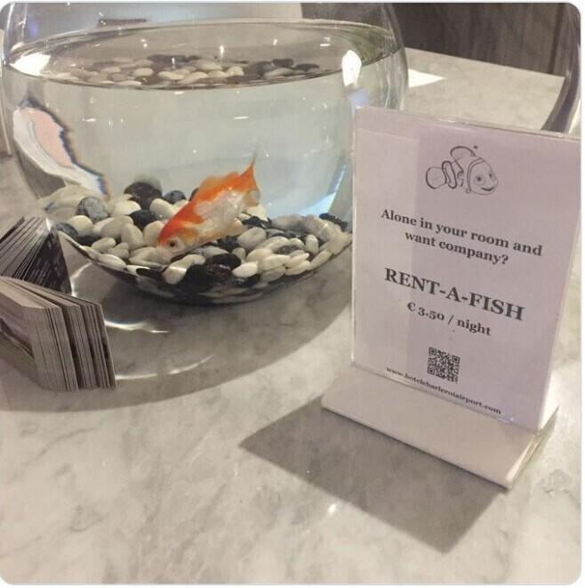 """В этом бельгийском отеле можно арендовать рыбку себе в номер: """"Вы один в номере, и желаете компании? Арендуйте рыбку - 3,50 евро за ночь"""""""