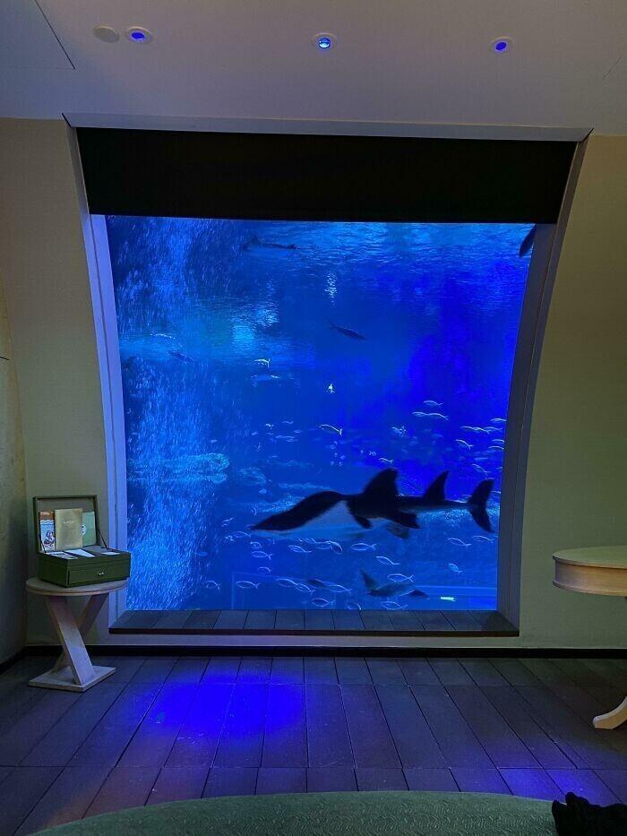 """""""А в нашем отеле есть гигантский аквариум с акулами, мантами, и другими рыбками. Красиво"""""""