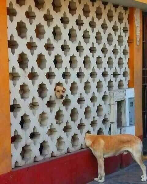 Собака попала в портал?