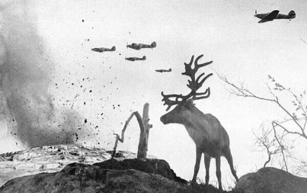 4. Контуженный олень смотрит, как военные самолеты сбрасывают бомбы на Советский Союз в 1941 году