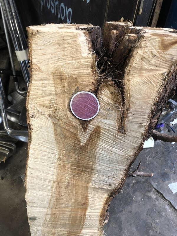 Дерево с мячом для гольфа внутри
