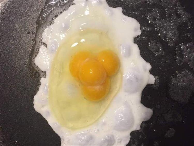 Яйцо с четырьмя желтками