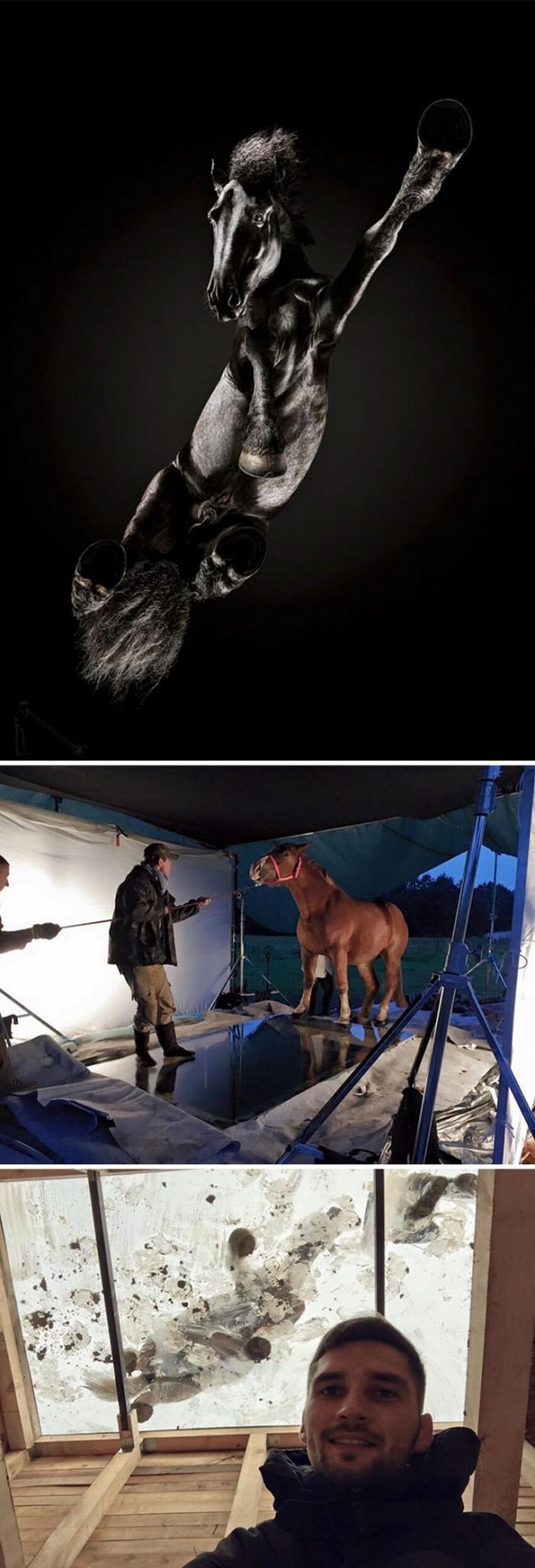 Наверное, самое страшное, когда конь захочет в туалет