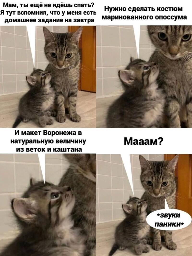 Самые удачные котомемы Рунета