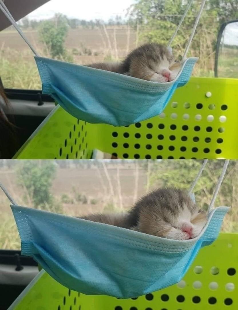 Гамак для котёнка
