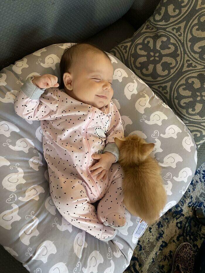 """""""Наша кошка родила котят через 2 дня после того, как я родила дочку. Этот котенок все время прибегает туда, где  спит малышка, и укладывается рядом с ней. Кажется, они будут хорошими друзьями"""""""