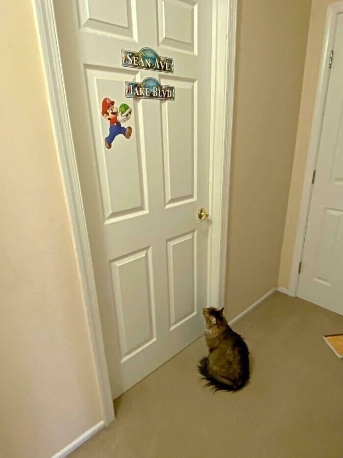 """""""Каждый день кот ждет у комнаты сыновей, пока те проснутся. Не из-за еды - у него есть еда, просто он хочет их видеть"""""""