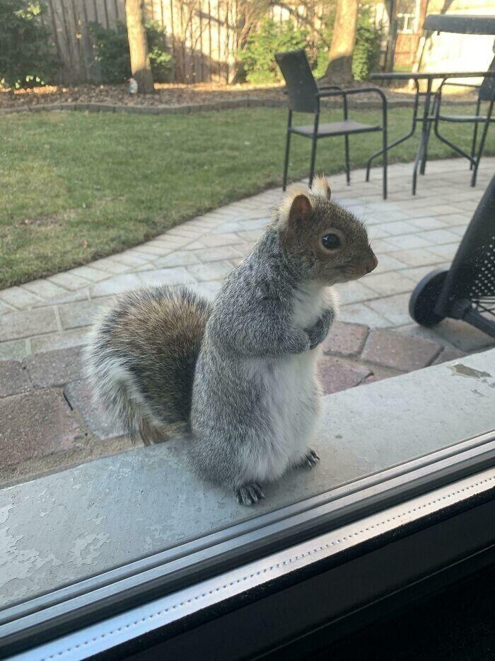 """""""Однажды мы накормили белку, забежавшую на наш задний двор. Теперь Фрэнки каждый день ждет свою порцию"""""""