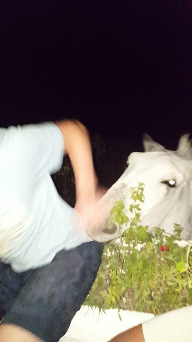 Лошадь подкралась незаметно