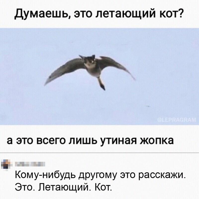 Как теперь развидеть летающего кота?