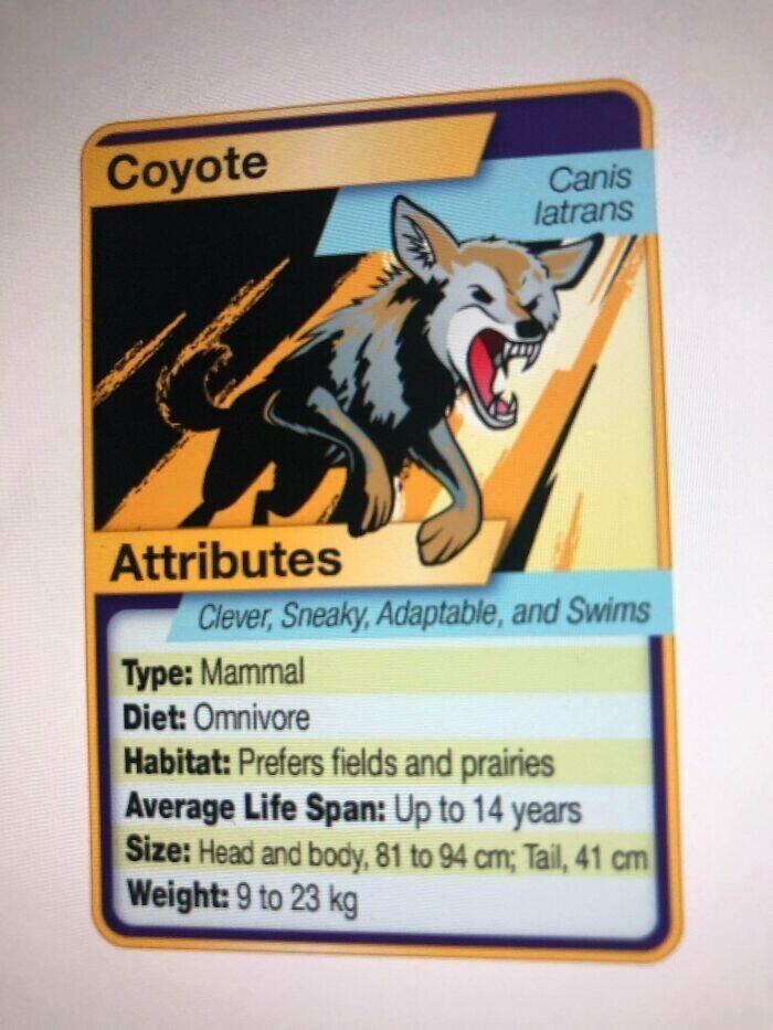 """""""Наш учитель сделал карточки с покемонамидля изучения зоологии """""""