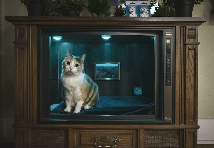 """""""Сделал из старого телевизора спальню для кошки"""""""