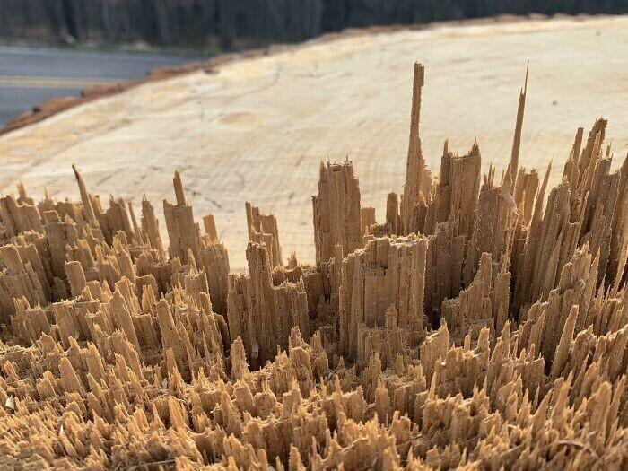 Обломок дерева похож на миниатюрную панораму города