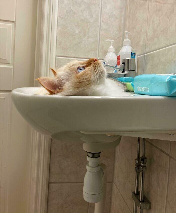 """""""Сначала я подумал, что часть кошки смылась в раковину"""""""
