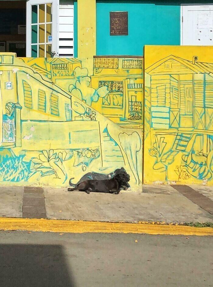 Жители Пуэрто-Рико нарисовали фреску с местным пейзажем и добавили силуэт собаки, которая любит здесь отдыхать