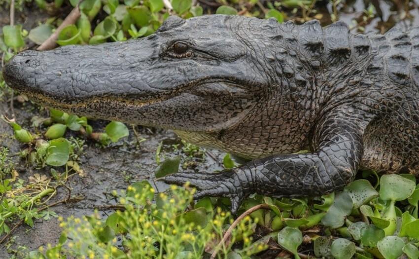 Это не крокодил