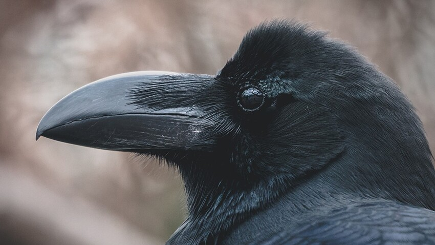Это не ворона