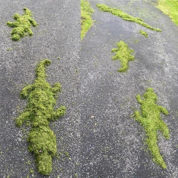 31. «Кто-то стриг газон и сделал из скошенной травы аллигаторов»