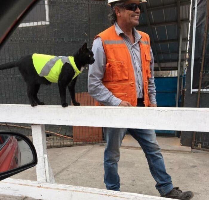 Кот-помощник строителей