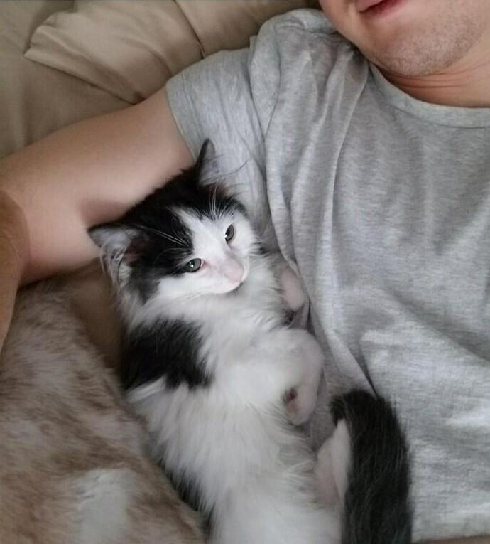 """""""Проснулся в арендованной на AirBnB комнате, а котенок хозяина пришел ко мне обниматься. Оценка 5 обеспечена"""""""