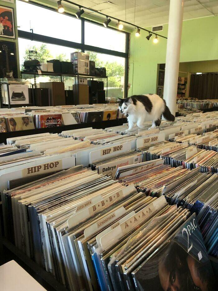 """""""Ким работает в моем магазине пластинок. Ее знает каждый посетитель"""""""