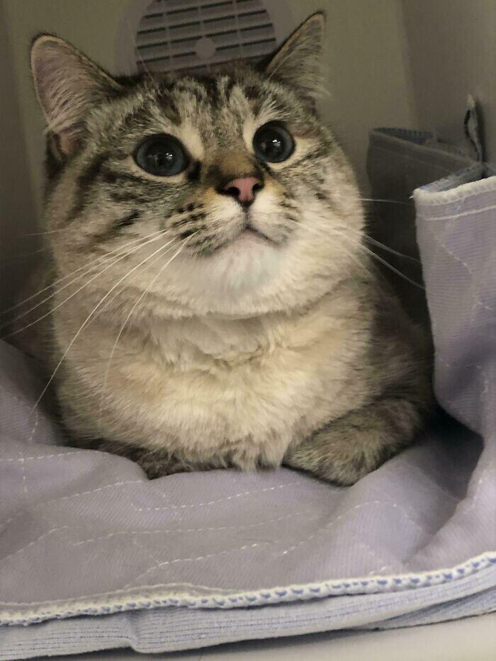 """""""Наша Миа только что сдала кровь, чтобы спасти жизнь другого котенка"""""""