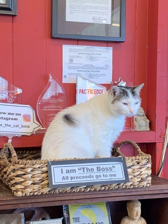 """Место кота в книжном магазине: """"Я босс. Все вырученные средства идут ко мне"""""""