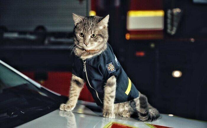 Чивас - кот-пожарный из Киева