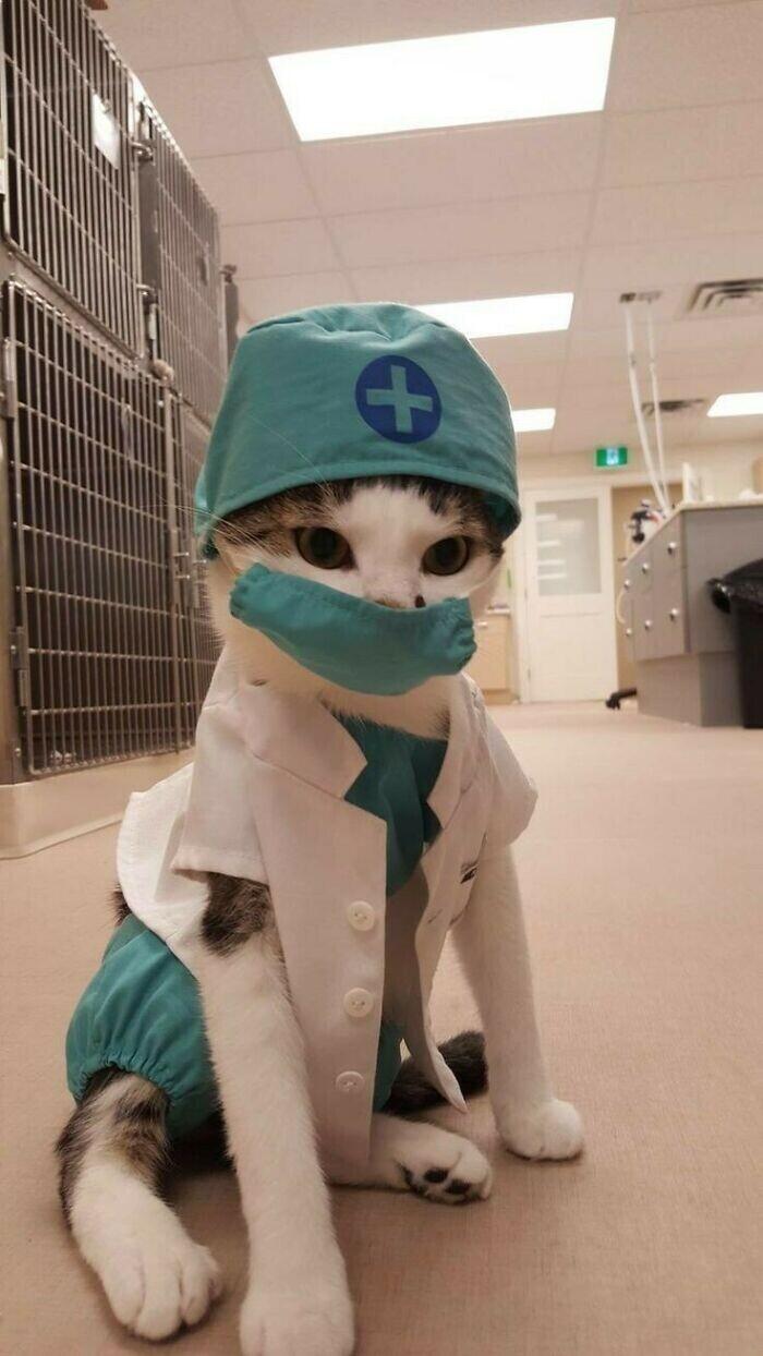 Самый очаровательный доктор