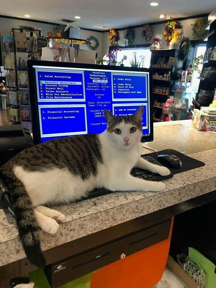 """""""Кот, которого мы подобрали на улице, теперь помогает моей маме в цветочном магазине"""""""