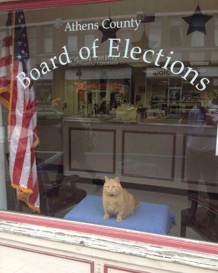 """""""Комиссия по выборам"""" - видно, что выборы в хороших руках"""
