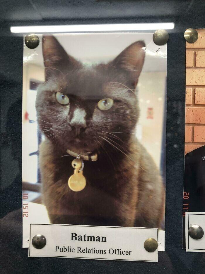 Бэтмен - сотрудник по связям с общественностью в университете