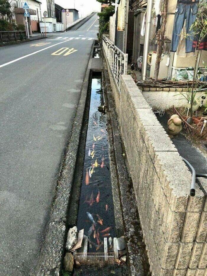 Вода в каналах улиц города Симабара такая чистая, что в ней плавают рыбы