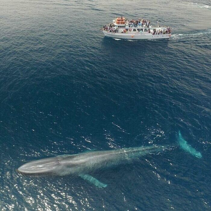 """""""Боже мой! Вот это кит!"""""""