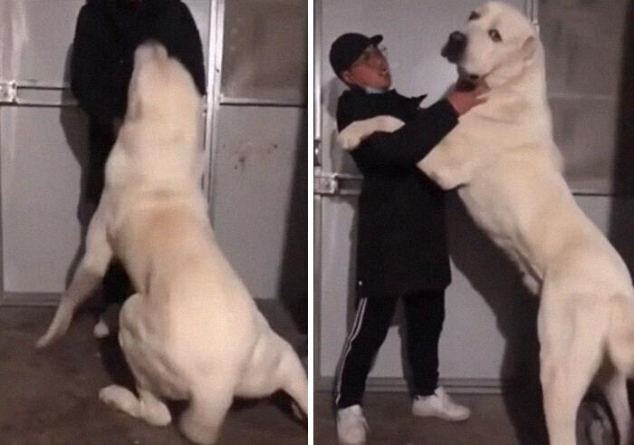 """""""Нет, он точно не белый медведь! И даже не родственник!"""""""