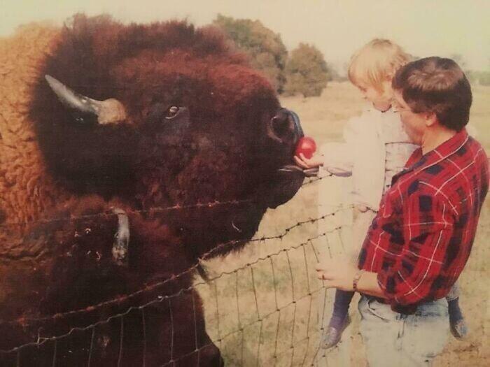 """""""В детстве папа возил меня кормить бизонов. Вот это были громадины!"""""""