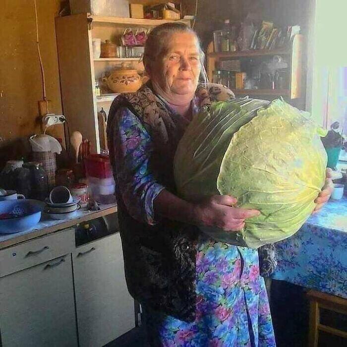 Капуста-рекордсменка