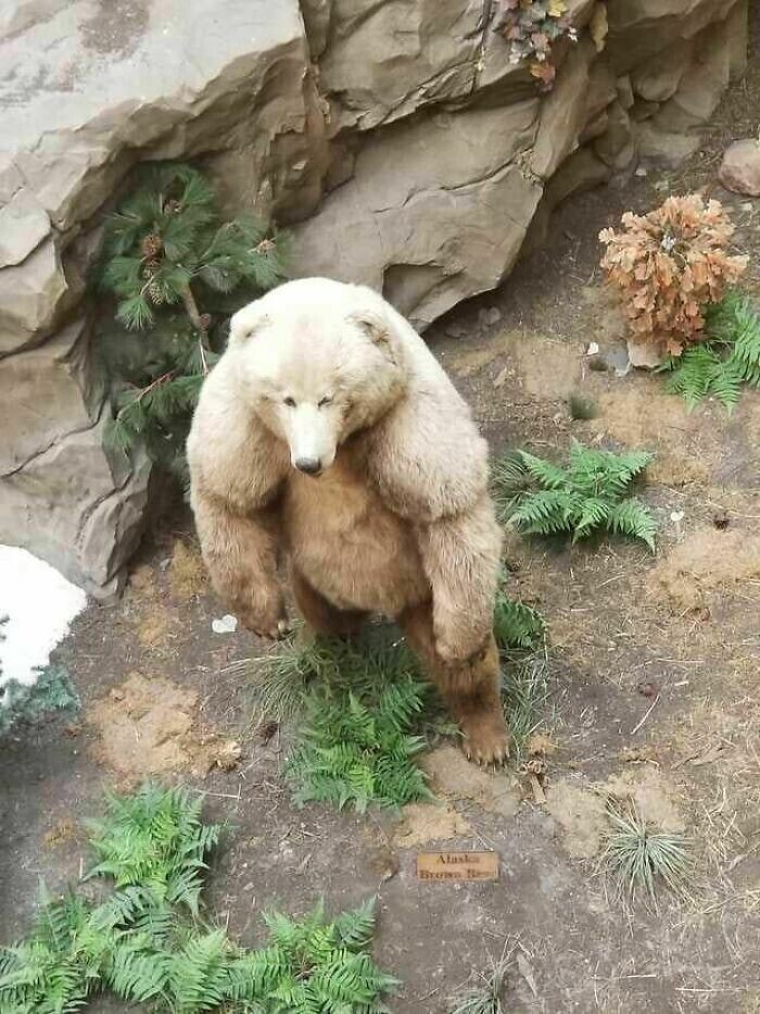 Медведь-монстр