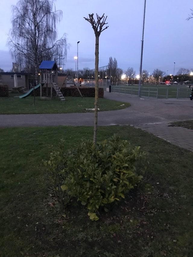 Я подумал, что это перевёрнутое дерево