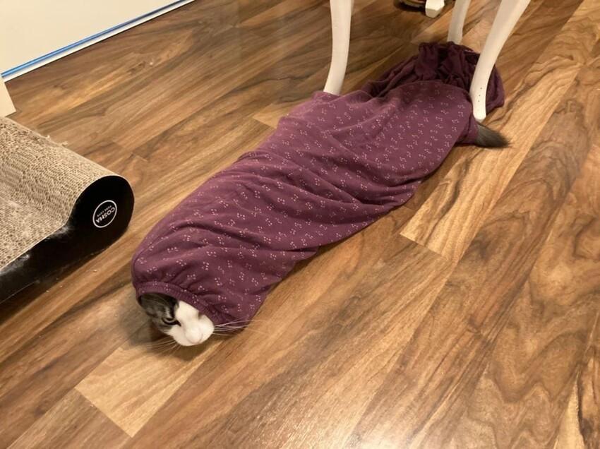 Утром я нашла свою пижаму