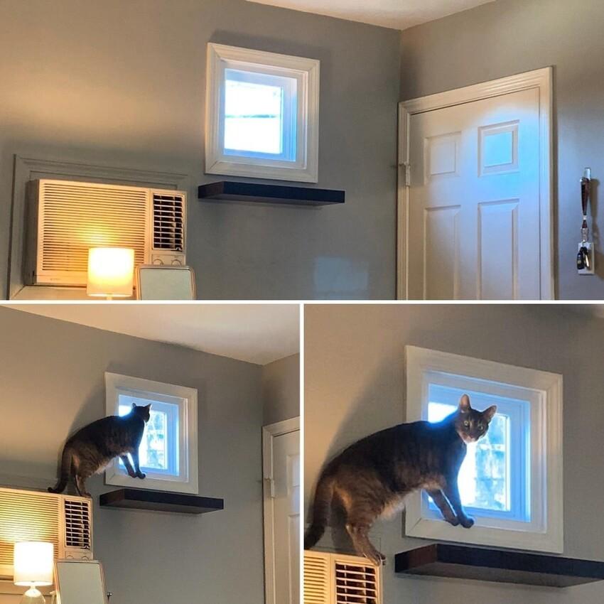 Я сделал для нашей кошки полку, чтобы она смотрела в окно. Но у неё другое мнение